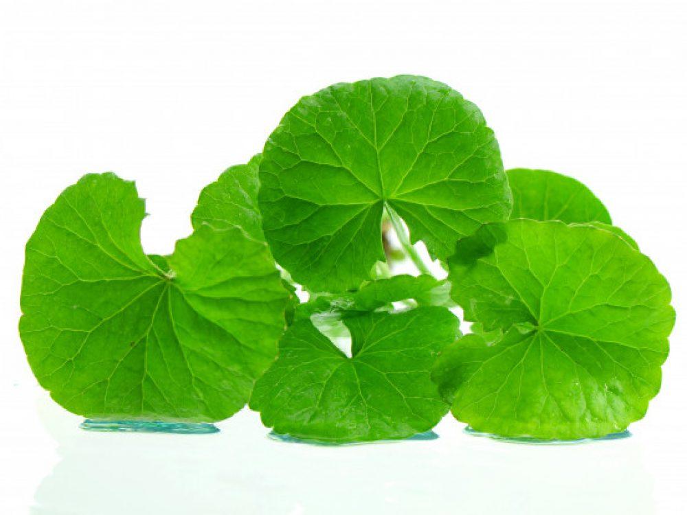 indian-pennywort-brain-tonic-herbal-plant_36049-216